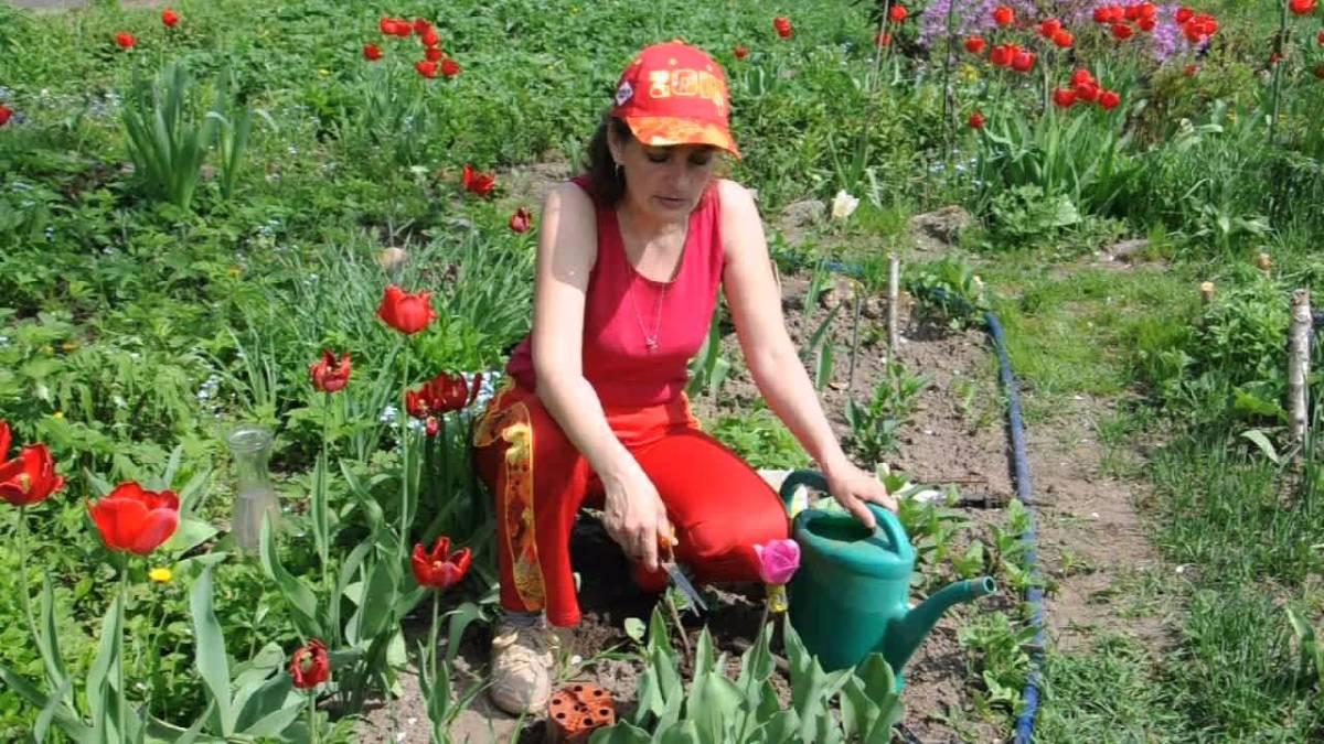 Как сажать тюльпаны в августе 68