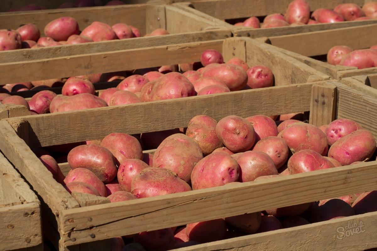 Как хранить картошку. Секреты зимнего хранения картошки. В статье рассказано обо всех тонкостях хранения картофеля