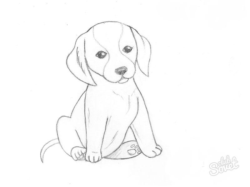 Рисунки карандашом самое легкое собакам