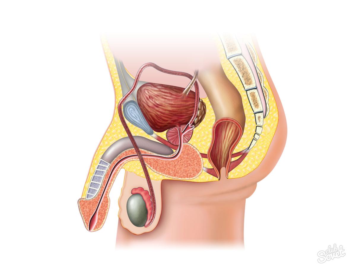 Анальный секс кишечная бактерия у мужчины