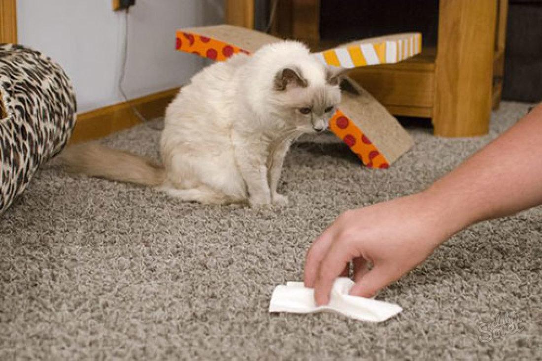 Как устранить запах кошачьей мочи в домашних  579