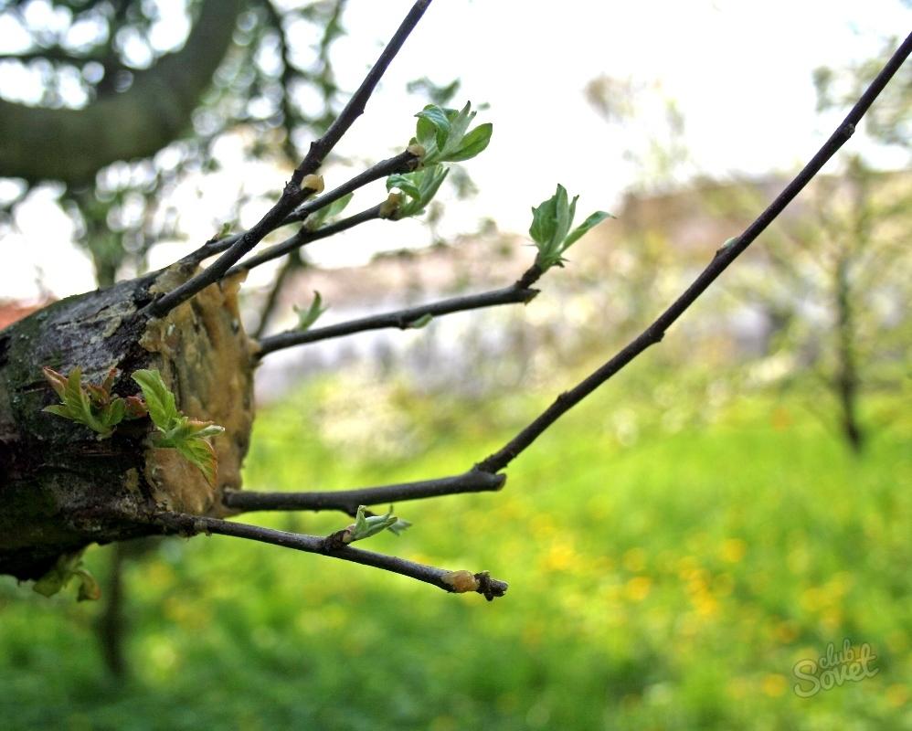 Посадка деревьев весной как сажать плодовые деревья 68