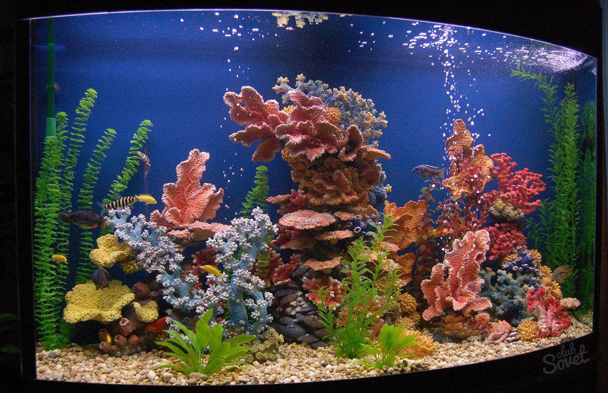 Как украсить аквариум своими руками фото 12