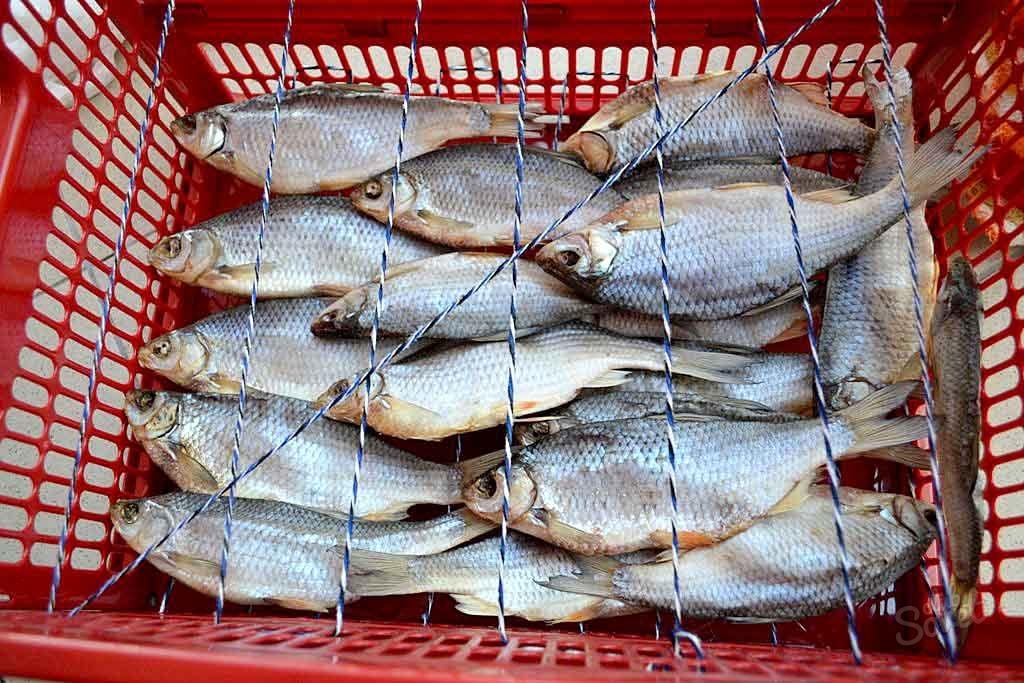 Как засушить рыбу домашних условиях