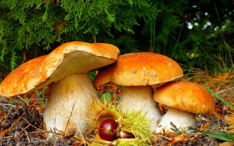 Сажать во сне гриб 96