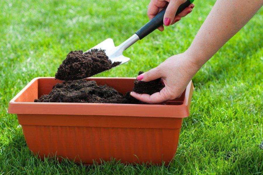 Как сделать кислую почву для гардении