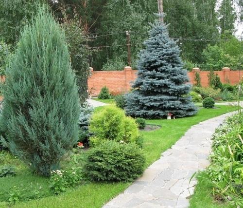 Сажают ли елки дачи 44
