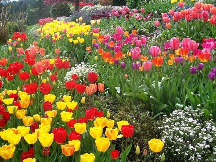 Весенние цветы которые сажают осенью 87