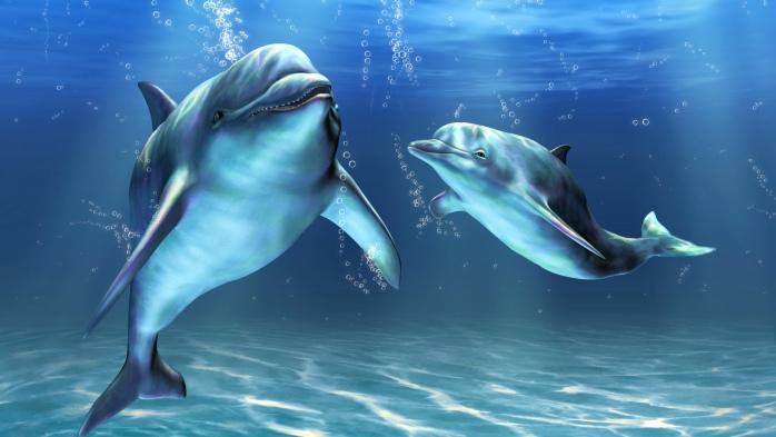 Дельфины во сне к чему снится беременной 76