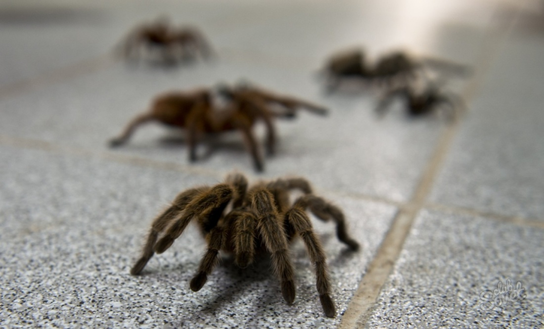 К чему беременным снятся пауки 86
