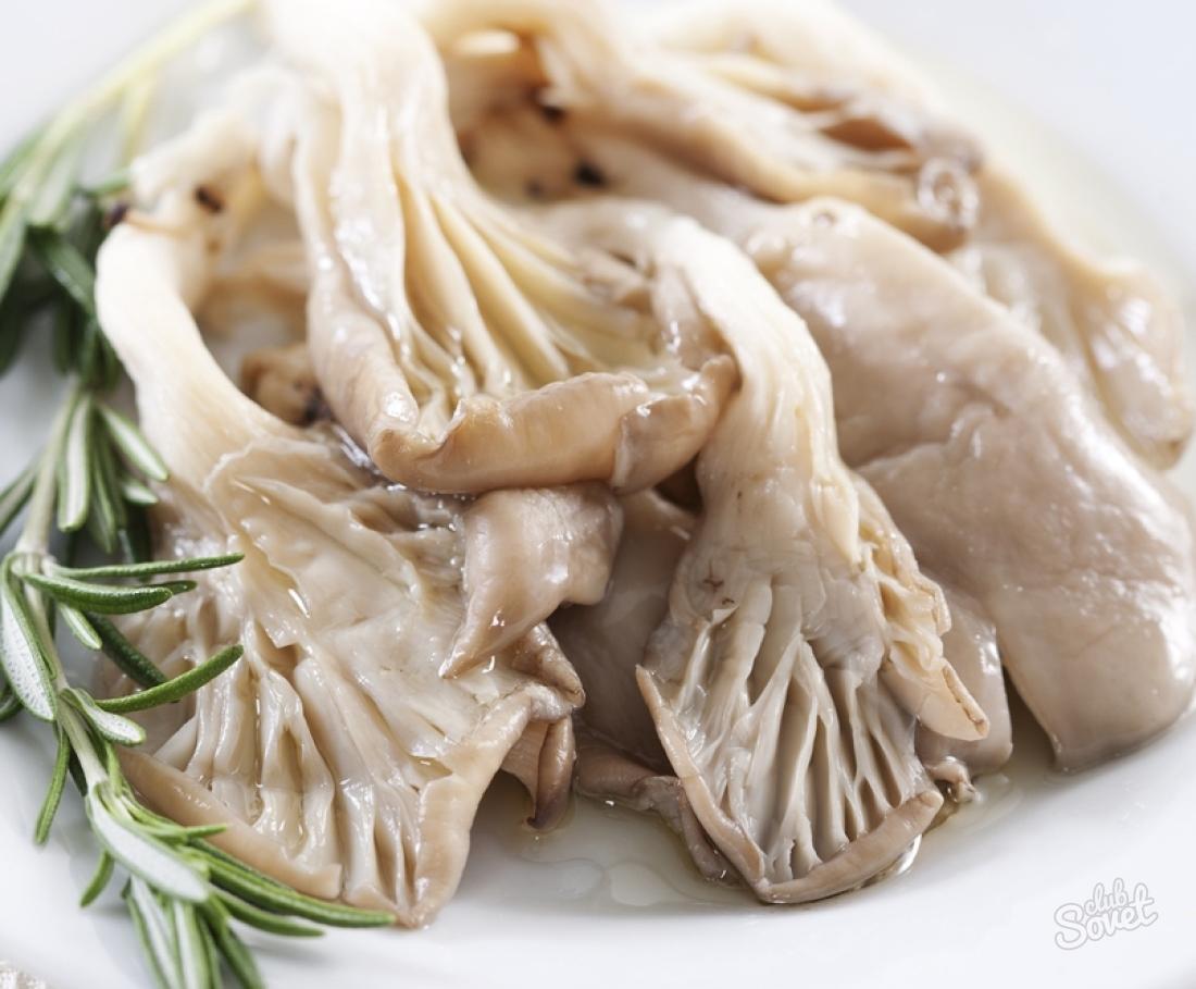 Как приготовить грибы вешенки