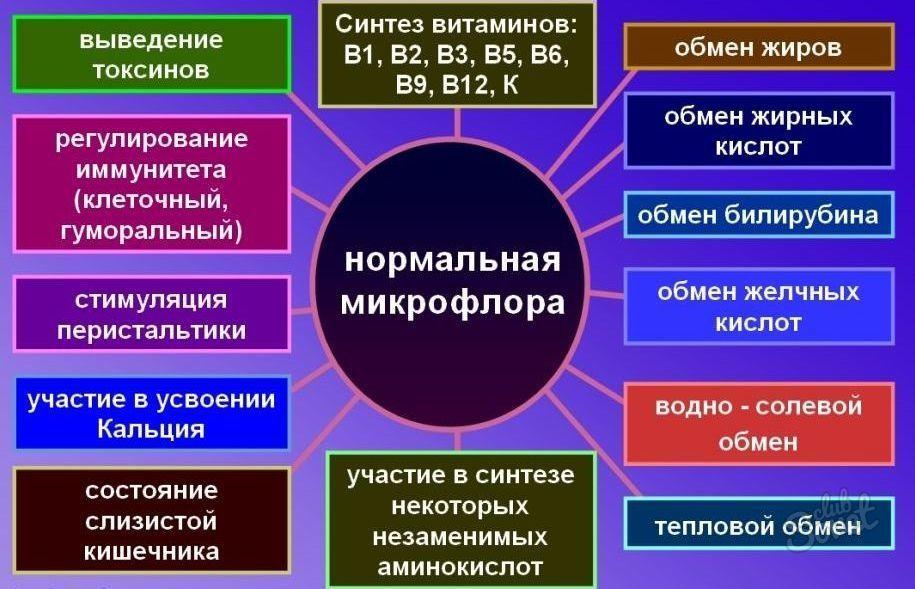 Флора Кишечника
