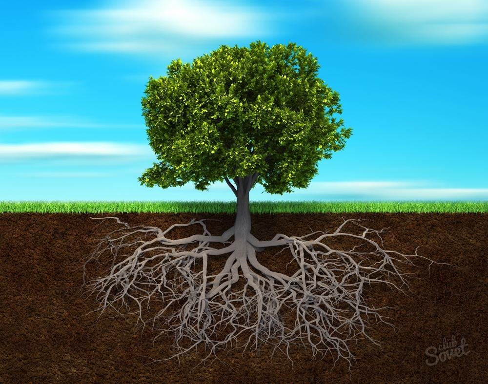 какое дерево погруженное в воду меньше гнеёт