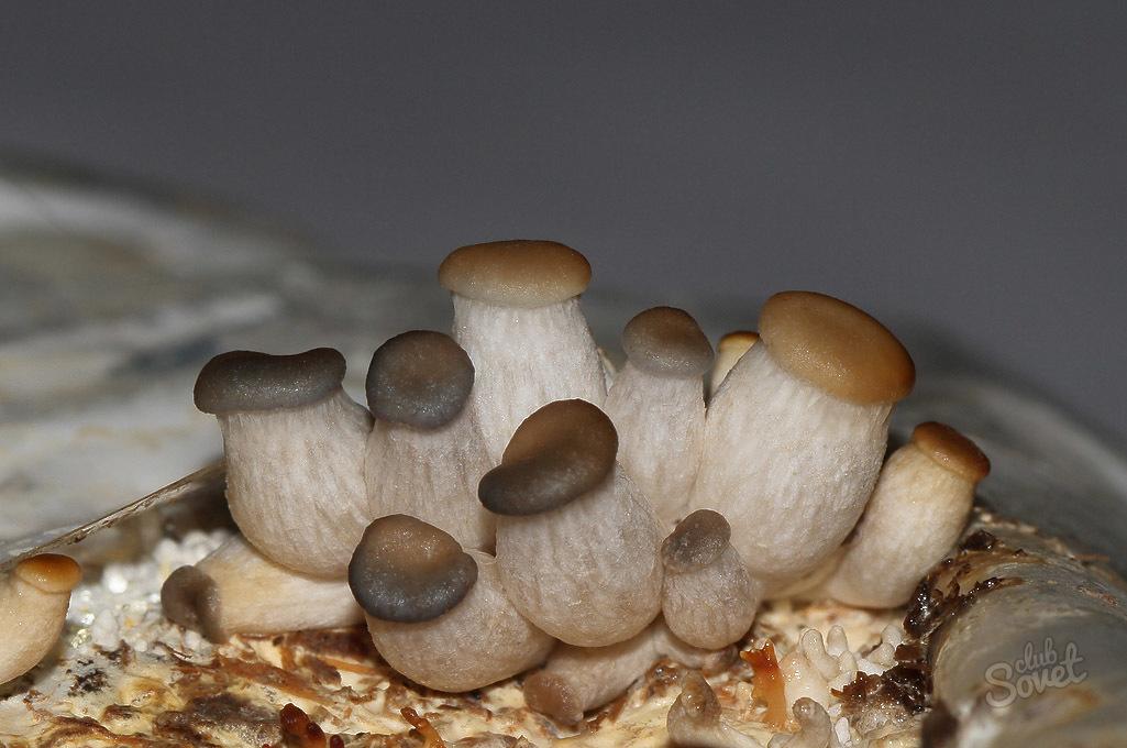 Выращивание грибов на дому белый гриб 41
