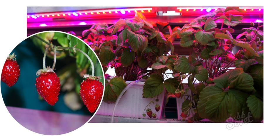 Фитолампы для растений своими руками из светодиодной ленты