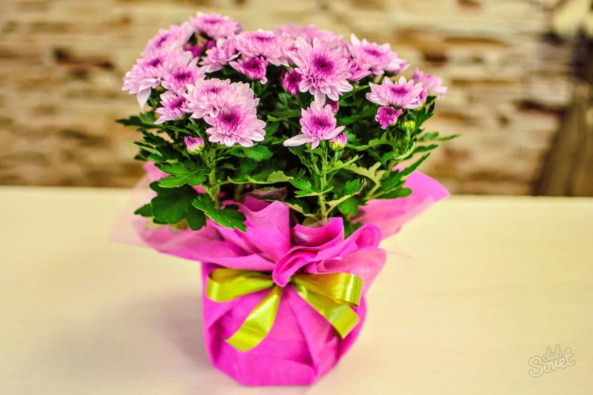 Упаковать цветок в горшке в подарок