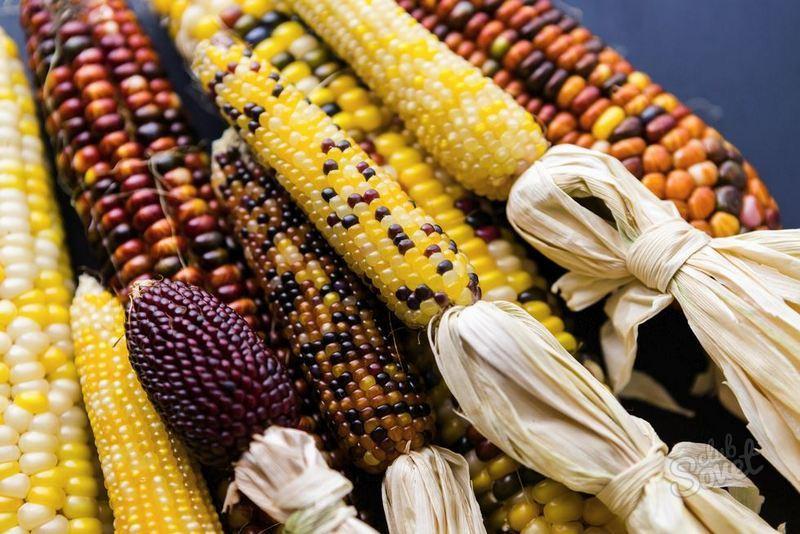 Сонник Кукуруза приснилась