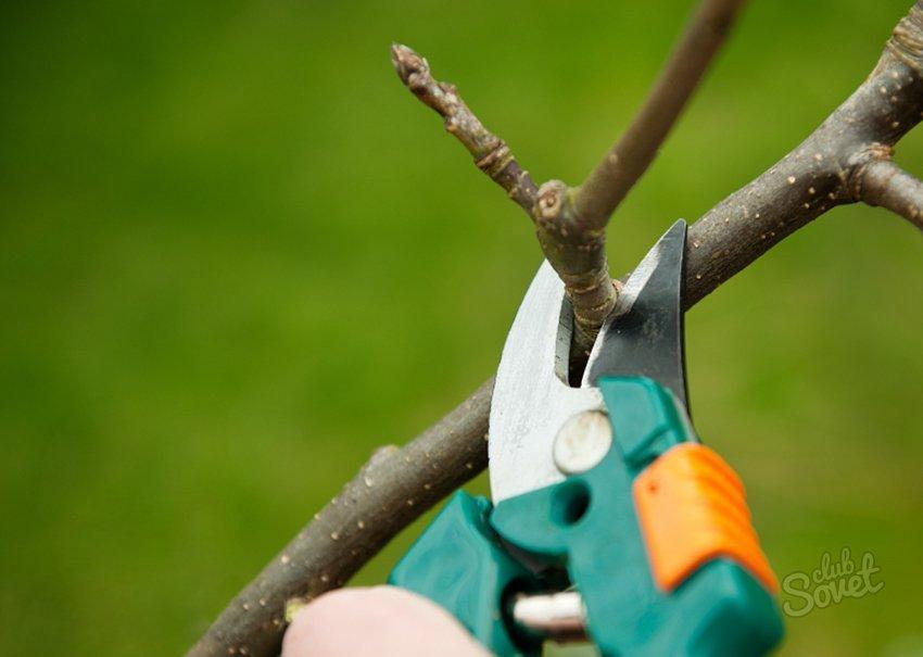 Как сделать из дерево обрезка 86