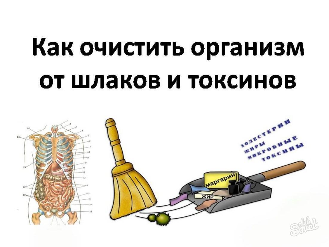 Выведение шлаков и токсинов в домашних условиях