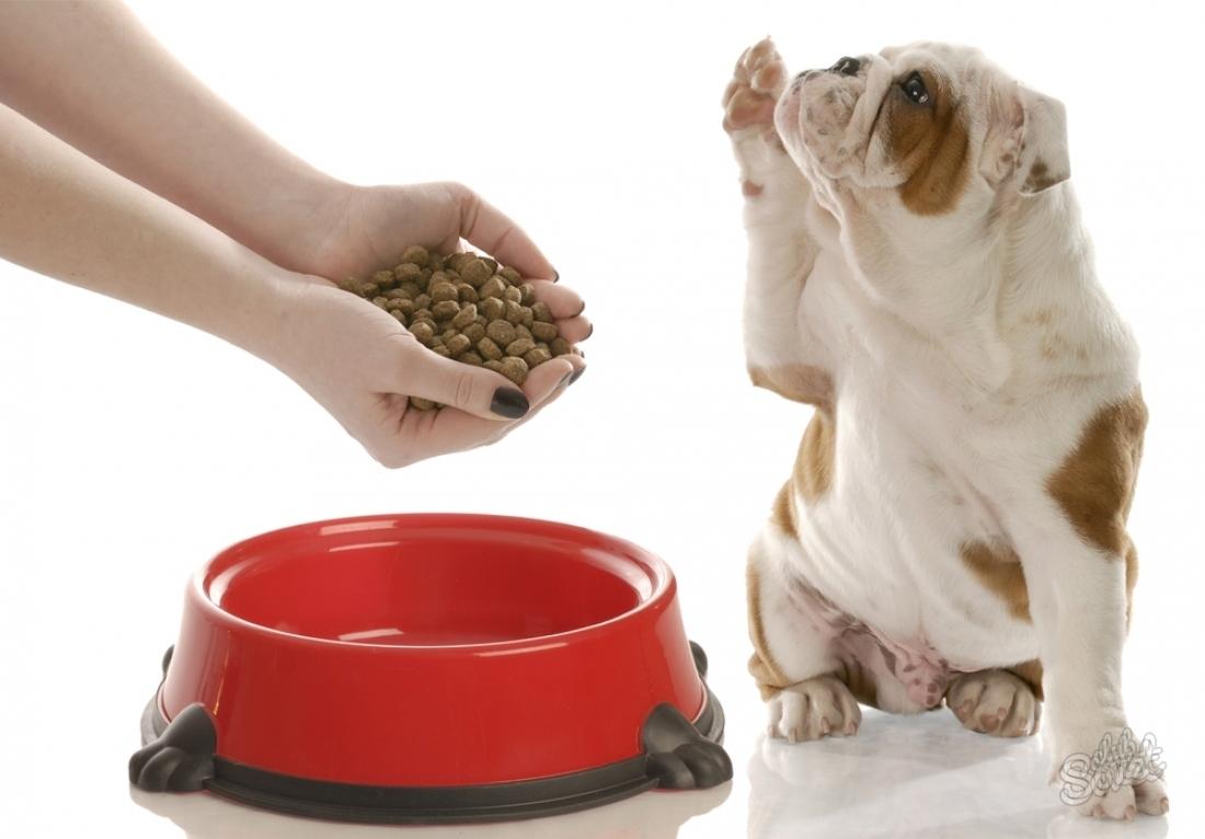 Выбирая чем кормить собаку опирайтесь