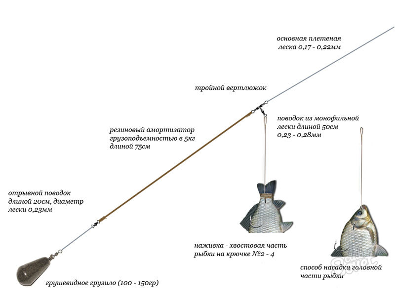 оснастка для ловли канального сомика