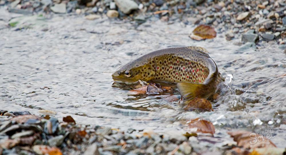 Дохлая рыба во сне беременной 75