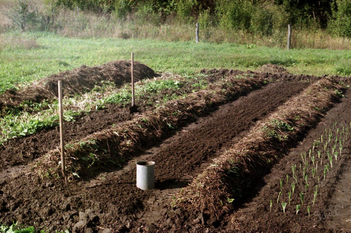 Что можно сажать осенью на огороде 855