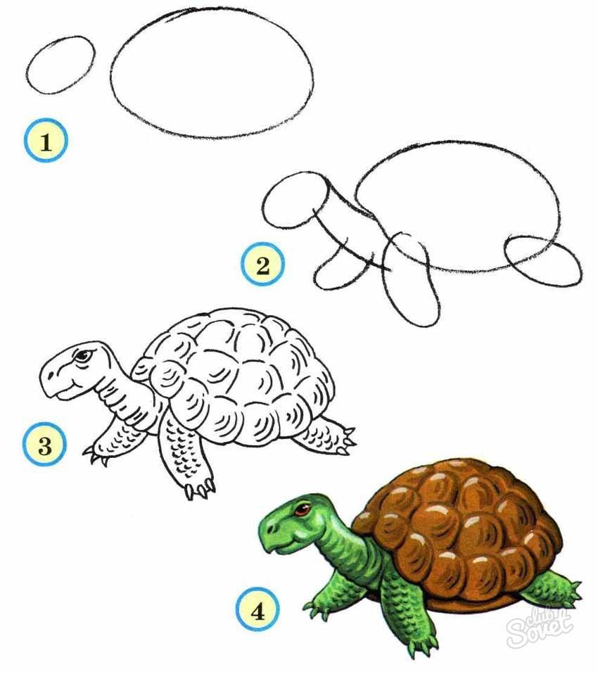 Рисуем поэтапно черепашку