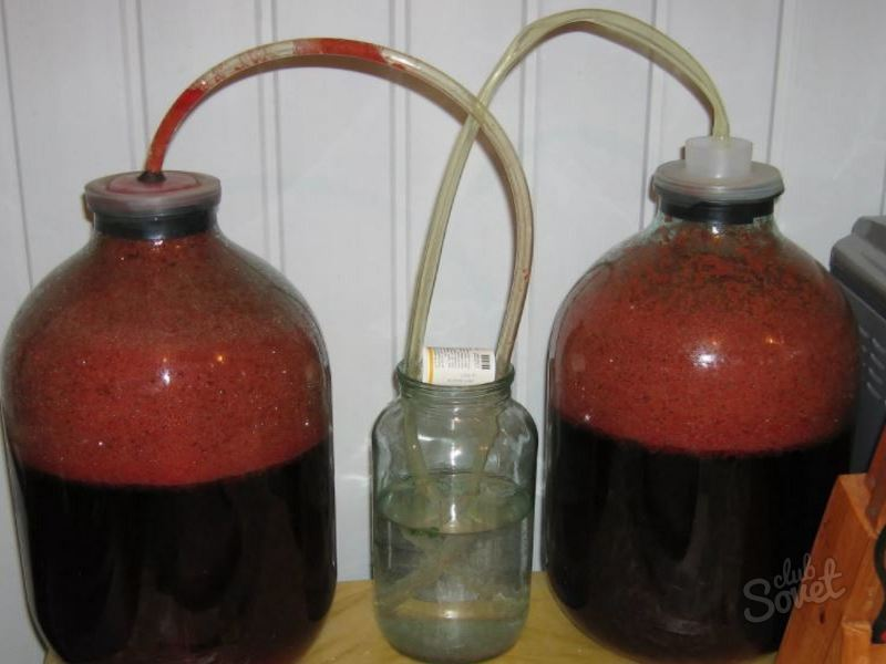 Как приготовить вино из слив