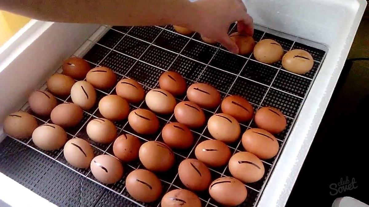 Для чего переворот яиц в инкубаторе своими руками