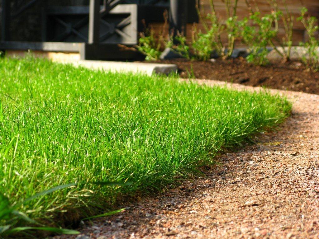 Рулонный газон своими руками на даче