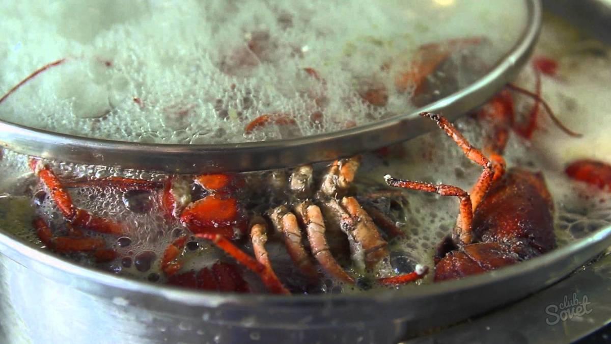 Разведение омара в домашних условиях