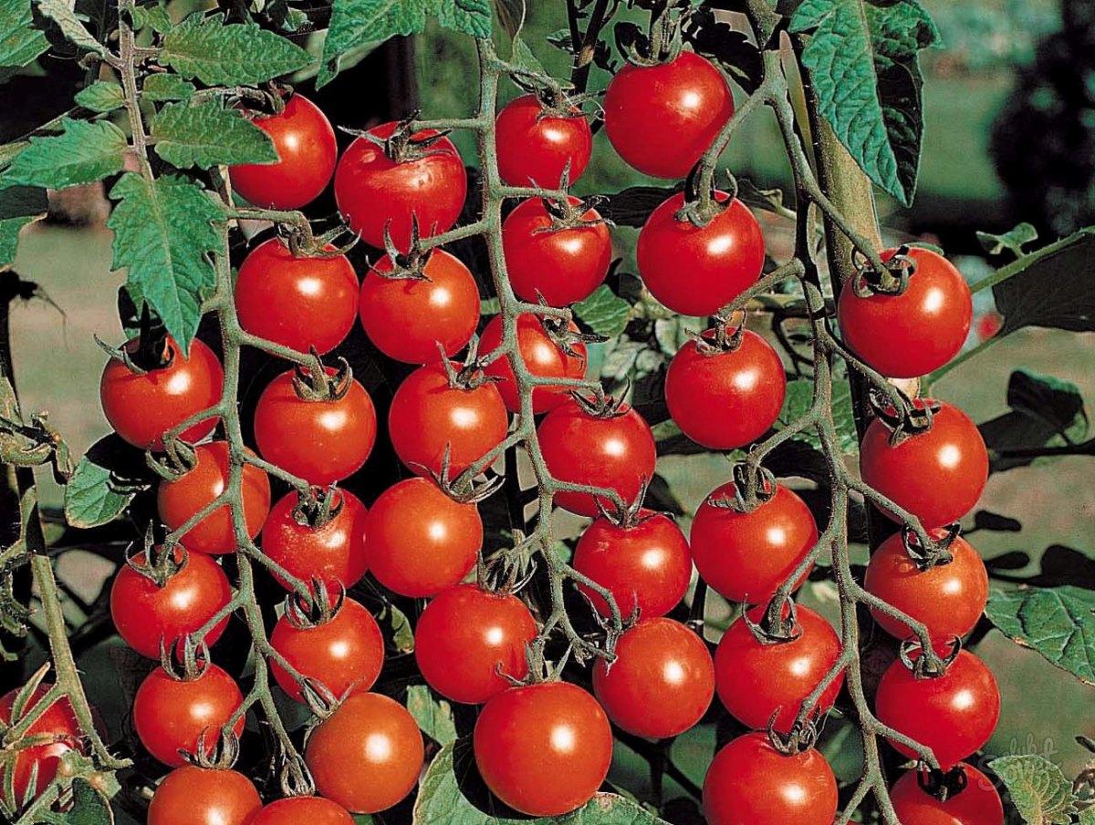 Фото загнал по самые помидоры 18 фотография