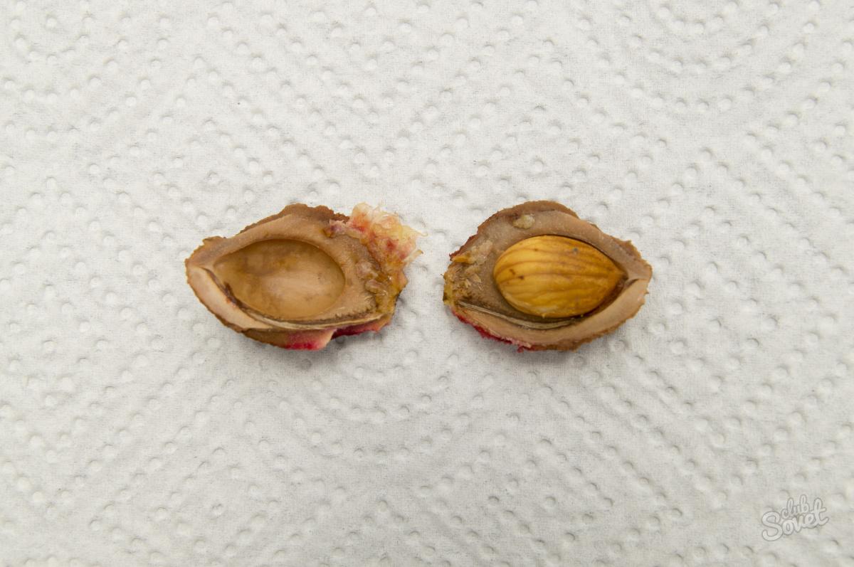 Выращивание персика в Подмосковье Сайт о саде, даче и 88
