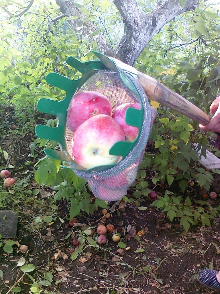 Приспособление для сбора яблок с дерева своими руками