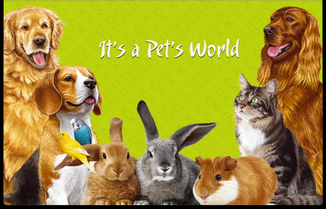 Рисунок животных для магазина