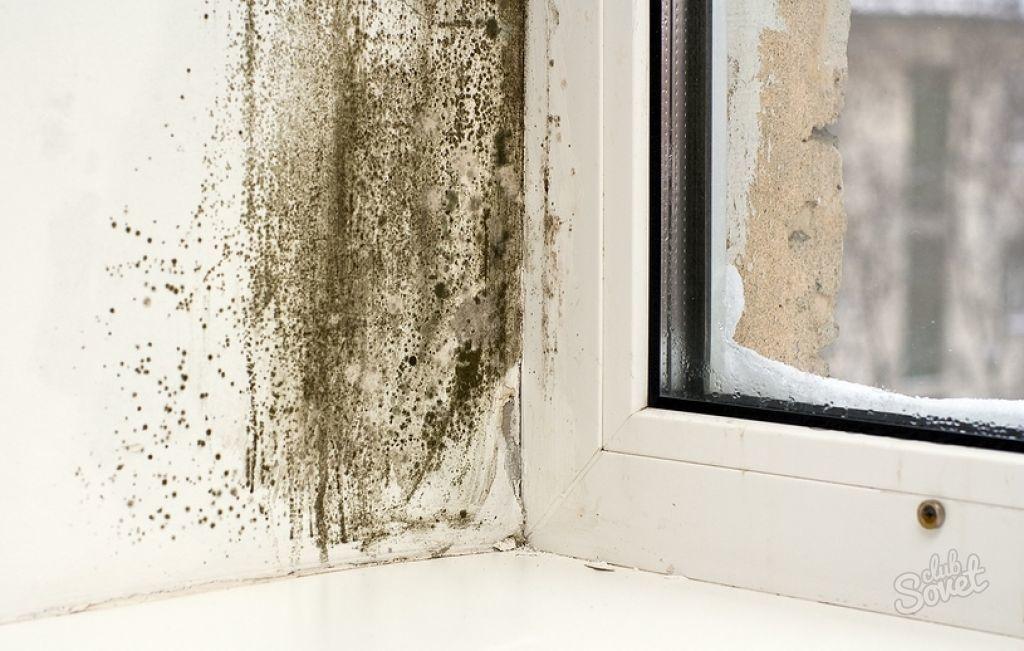 Чем обработать стены от плесени. как удалить плесень со стен.