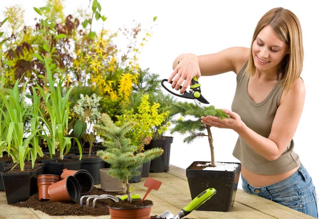 Уход за комнатными растениями в домашних условиях орхидея