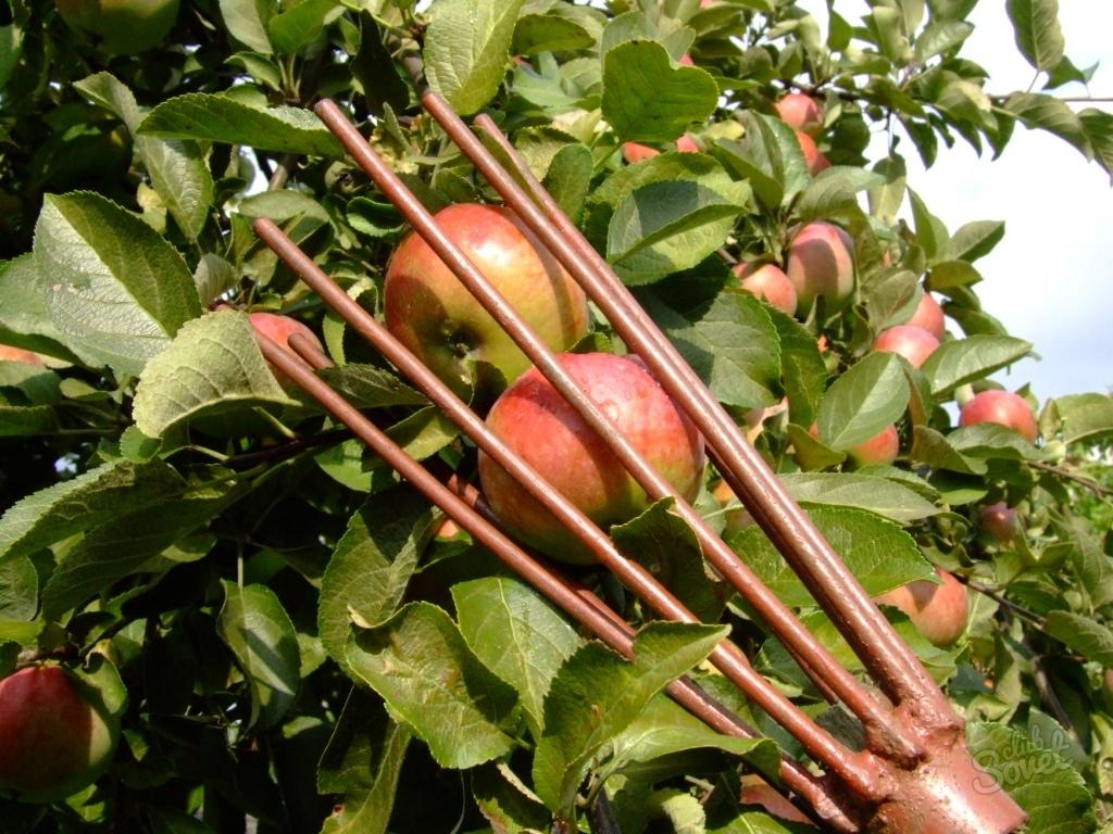 Своими руками для сбора яблок 817