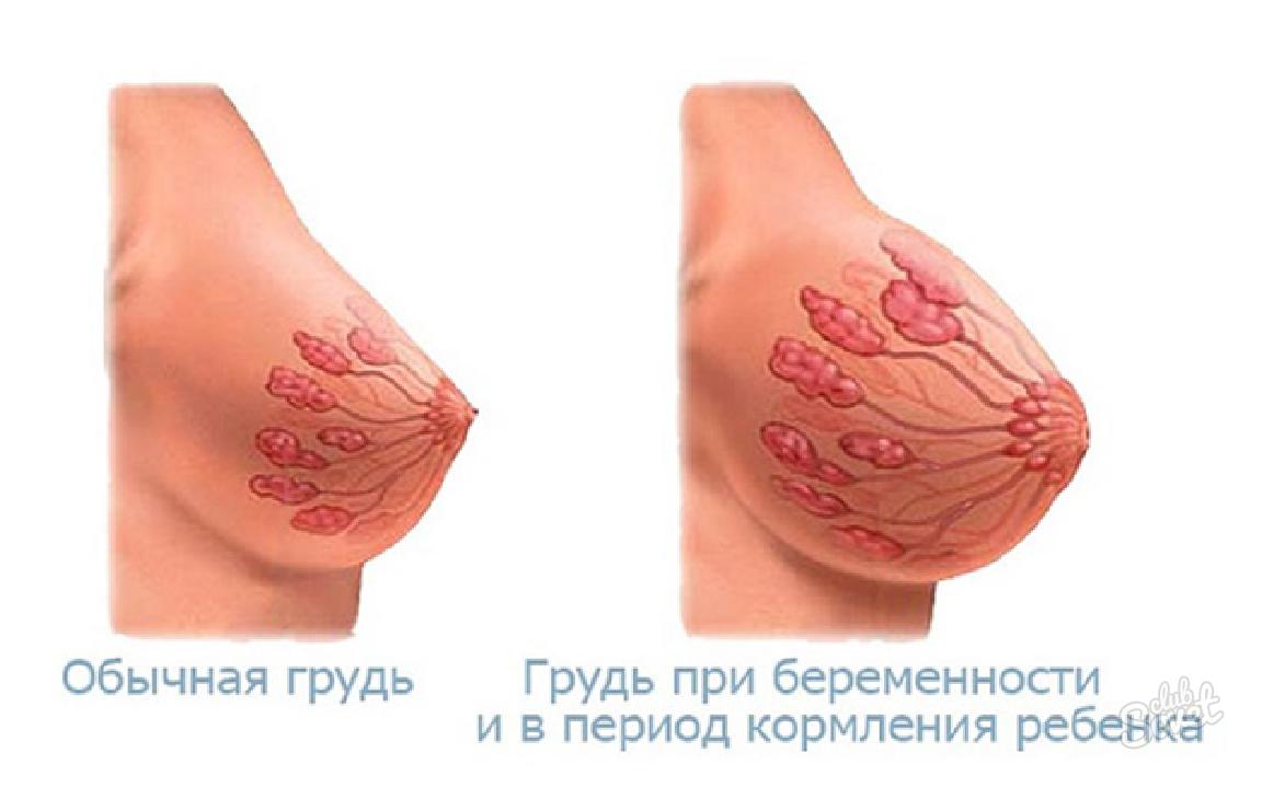 Как болит грудь на малых сроках беременности