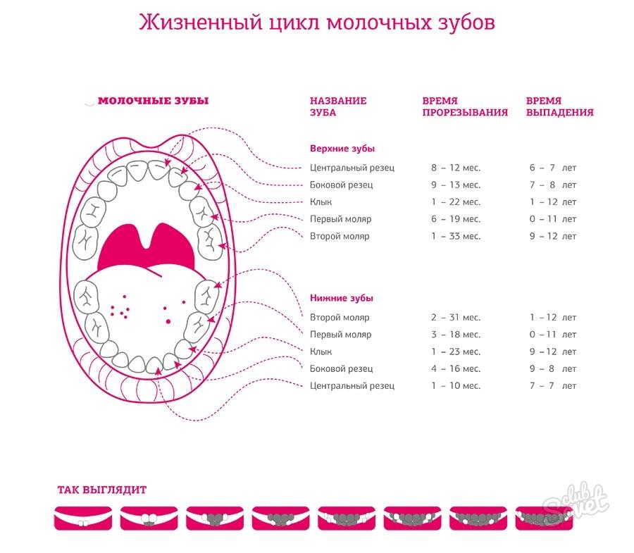 Когда начинают болеть зубы у беременных 39