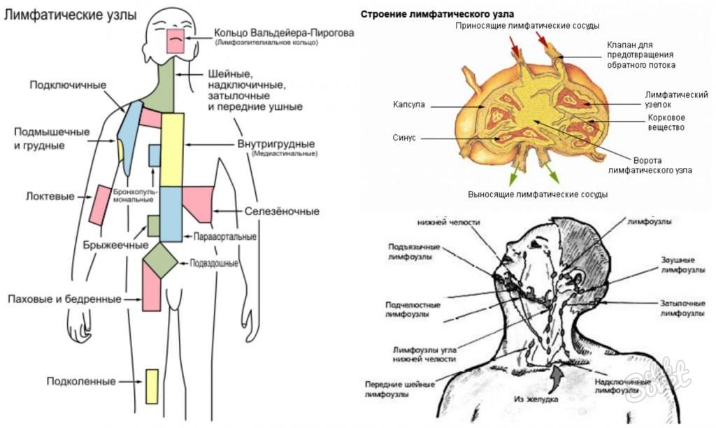 Как лечить увеличенные лимфоузлы в брюшной полости