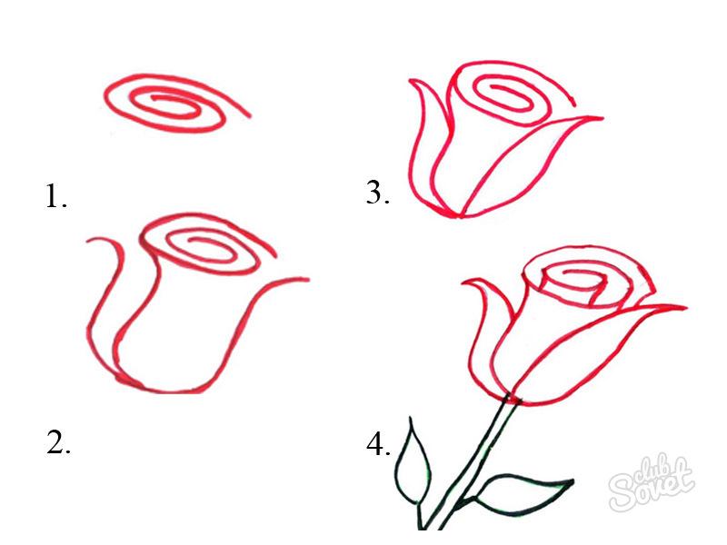 Как нарисовать самую легкую розу