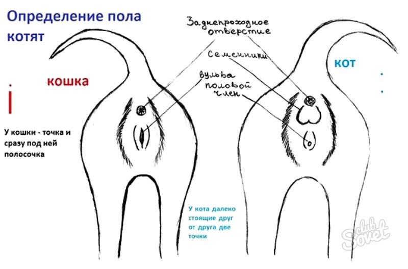 Форма половых органов фото фото 616-83