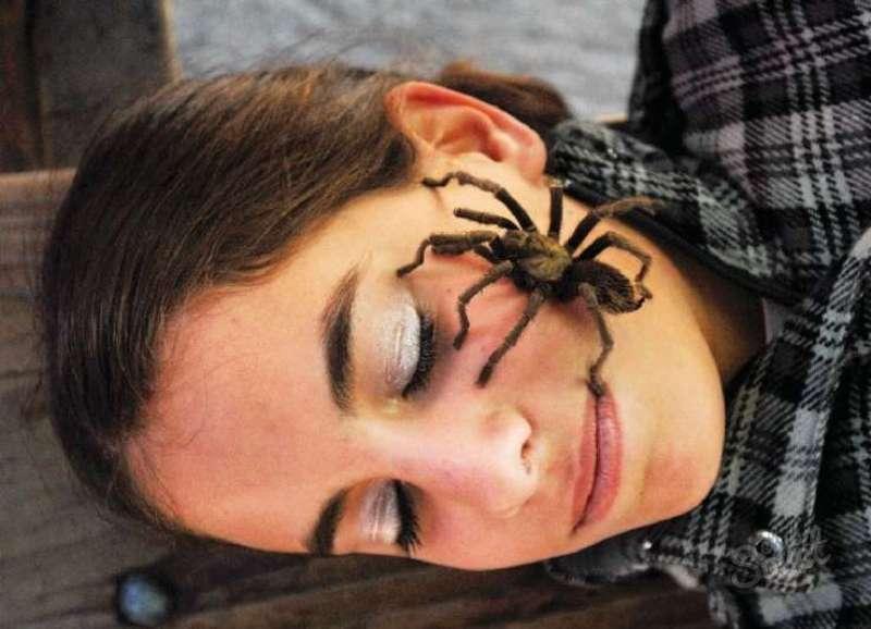сберегающее тепло паук ползет к дверям технологии
