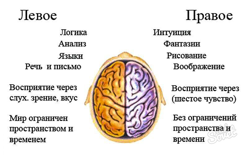 Как связано развитие мозга и совершенствования орудий