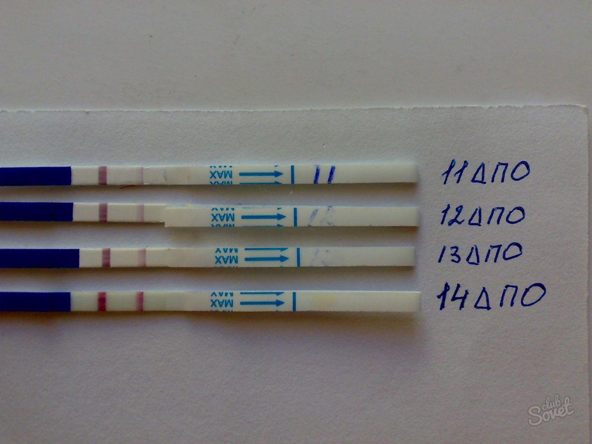 На какой день тест показывает беременность. Когда тест на беременность показывает результат после оплодотворения. Как посчитать