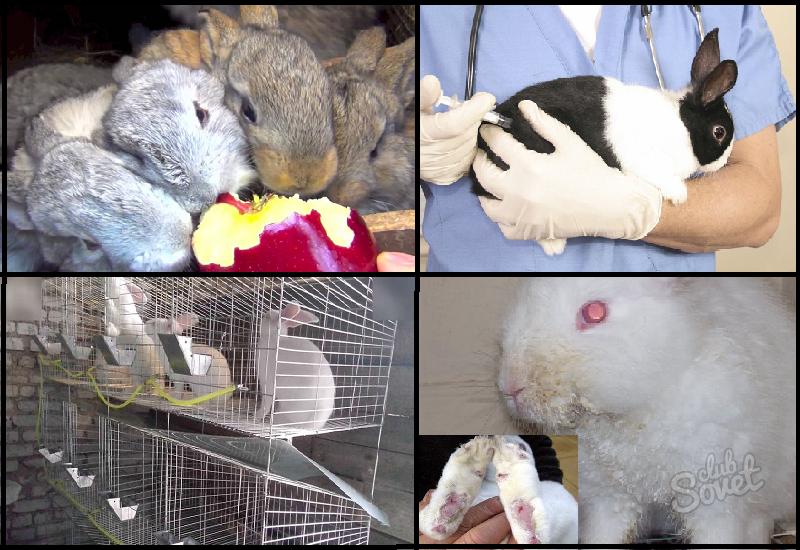 Как кормить декоративного кролика в домашних условиях 22