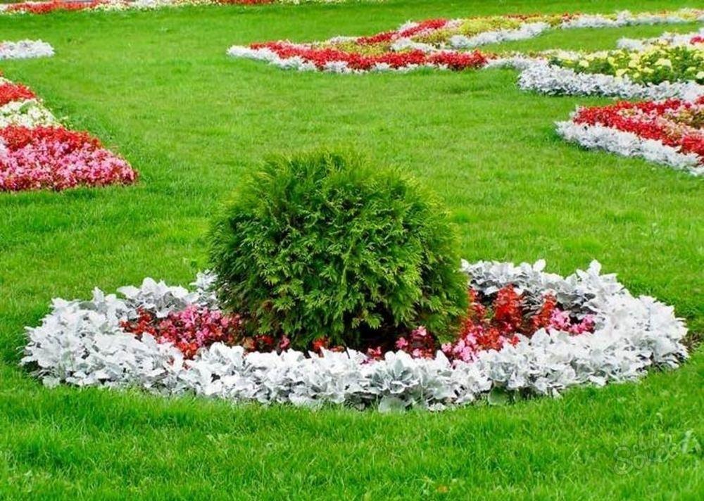 Красивый газон своими руками фото