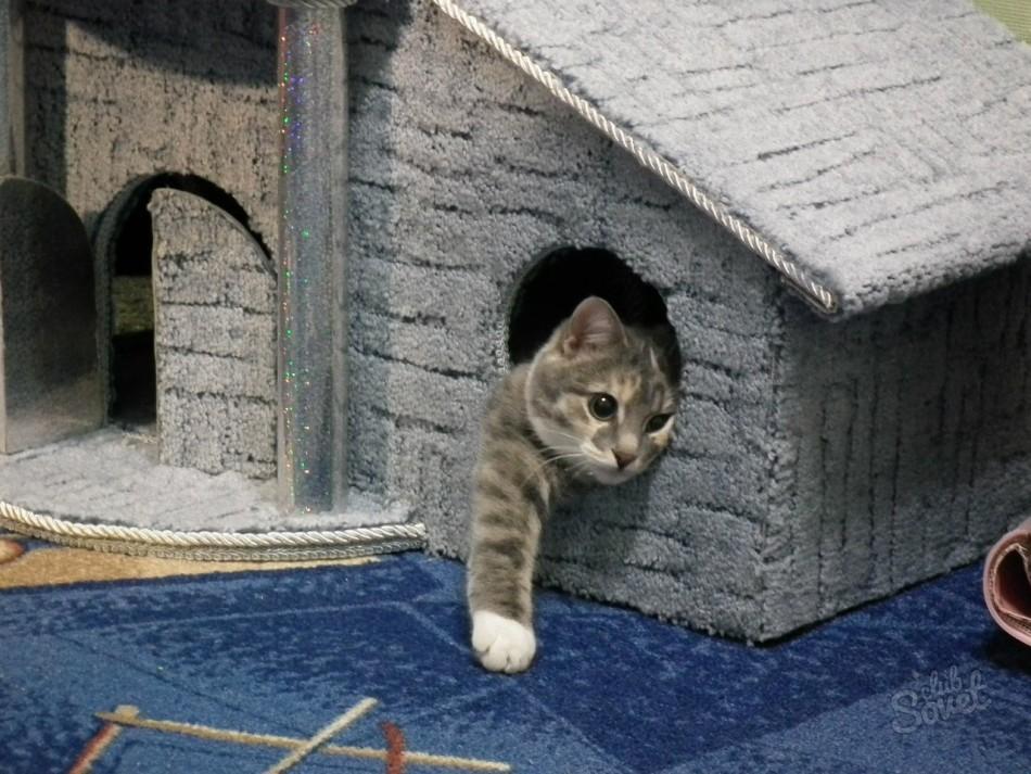 Как кошке сделать кошке домик своими руками